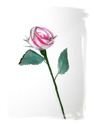 Flowers 015 (2)